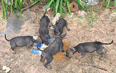 Fütterung Baan Taling Ngam Area