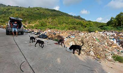 Fütterung an der Müllkippe - Markus