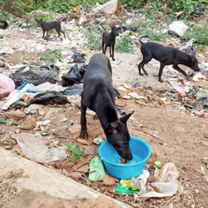 Fütterung an der Müllkippe
