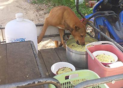 Fütterung Valley-Dogs Lamai