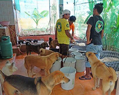 Fütterung im großen Shelter - endlich Futter