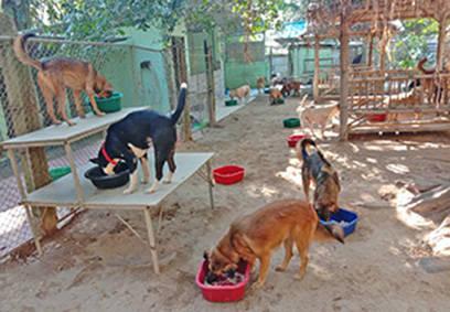 Fütterung im großen Shelter