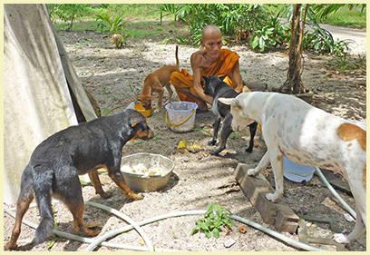 Futterstellen auf Koh Samui