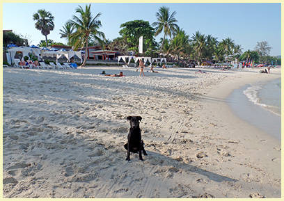 Dogs on Chaweng Beach