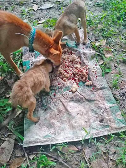 Feeding Grounds on Koh Samui